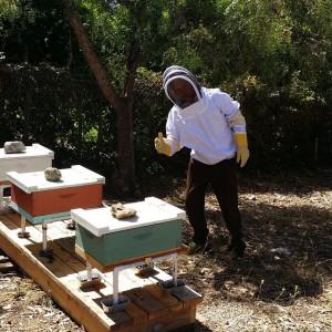 flea-bees3