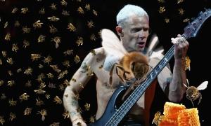 Flea včelařem