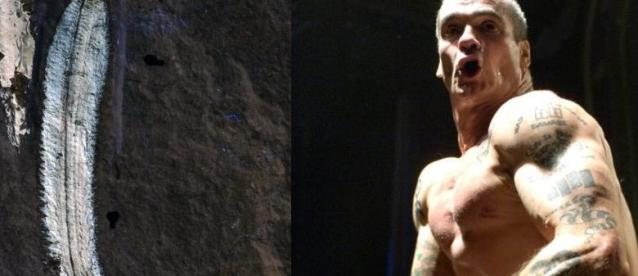 Rollinsuv cerv komplet